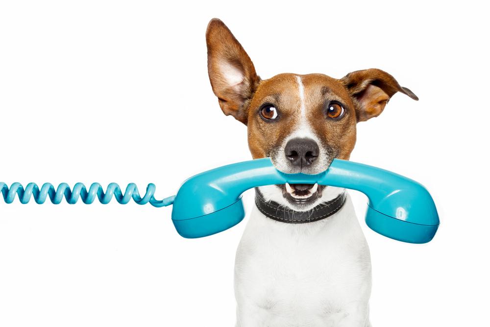 contact dog